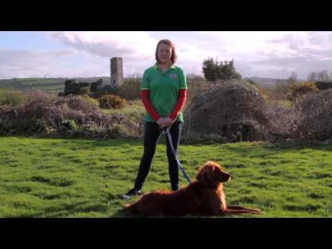 Maxi Zoo Ireland-Responsible Dog Ownership