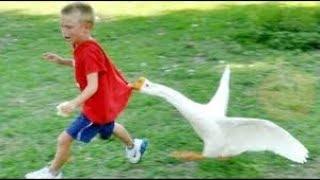 مواقف مضحكة للاطفال مع الحيوانات 2019 ستضحك حتي البكاء | مواقف مضحكة للاطفال جدا مع الحيوانات 2019