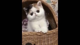 CUTE WEIRD CAT!