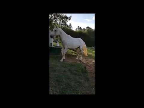 This horse was nearly put down...