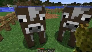 Minecraft, stavění ohrady a ochočování kráv a oveček.