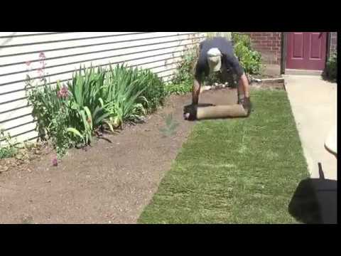 Natural Grass Carpets for Lawns and Gardens