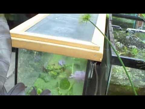 # 723 We gonna raise some Brine Shrimp Carls Aquarium
