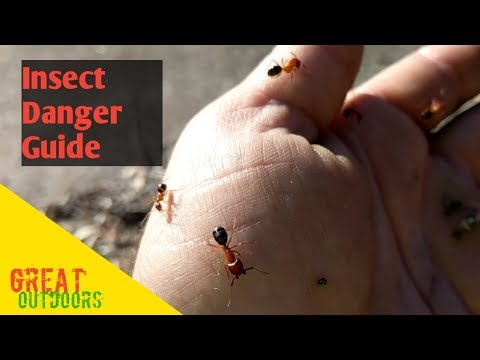 Insect pain sting index. Fire ants stinging insect danger guide