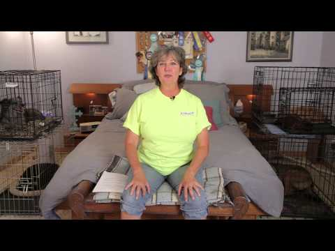 How to Keep Multiple Dogs Calm in the House : Dog Training & Care