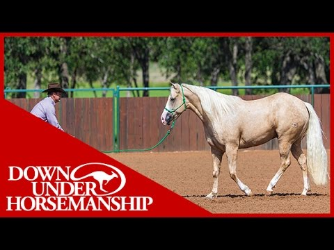Clinton Anderson: What are the Features of the Downunder Horsemanship Rope Halter?