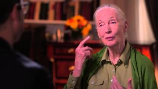 Dr. Jane Goodall Interview: Last Week Tonight with John Oliver (HBO)