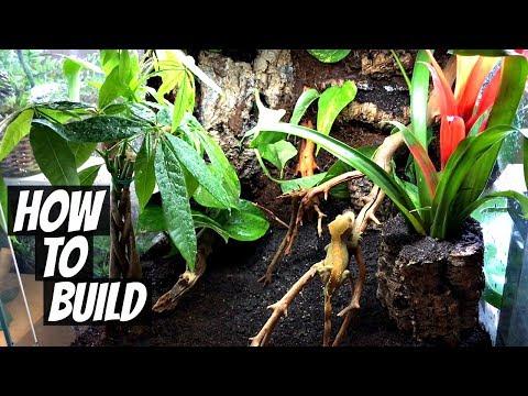 How To Build a Naturalistic Live Vivarium