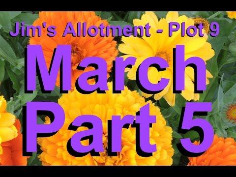 Jim's Allotment - Plot 9 - March Tour Part 5 - Calendulas, Aquilegia, Raspberries & Chickens