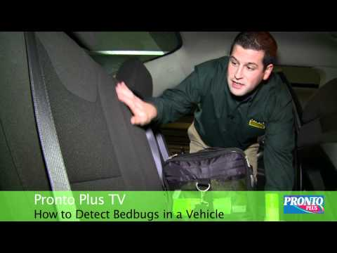 How To Detect Bedbugs In a Vehicle