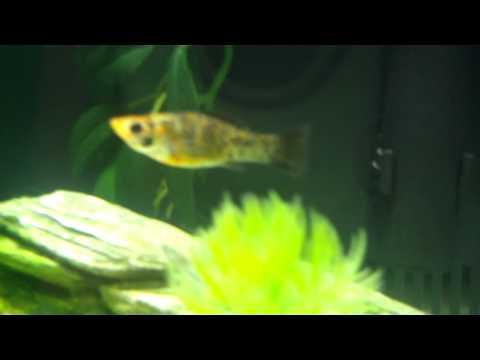 Update on my fish Tank! (6/20/11)