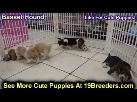 Yorkie Poo Puppies Dogs For Sale In Montgomery Alabama Al