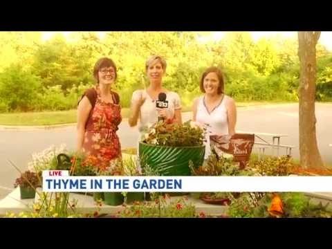 Thyme in the Garden: The Carter Sisters Talk Plants, Part 2