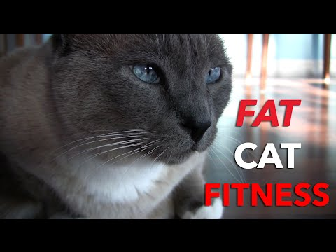 Feline Fitness for Fat Cats