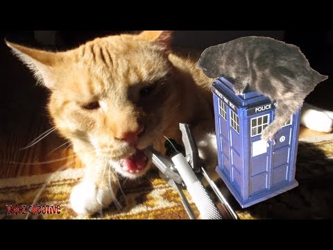 Cats react to Doctor Who
