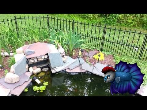 Pond Update and How To Get Rid of Algae.