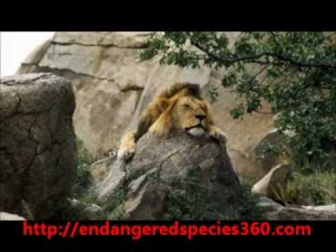 Endangered Species ~ Protect Endangered Species and Stop Animal Cruelty