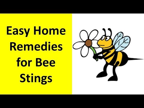 Home Remedies for Bee Stings | How to Treat Bee Sting
