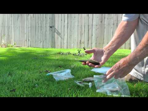 How to Salt down your dead fishing bait by WillCFish Tips and Tricks.