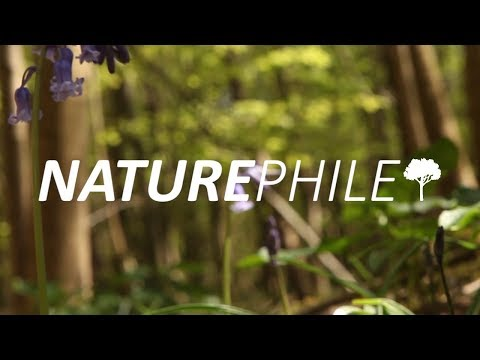 Naturephile: The Wild Cardboard Box  |  Kris and Jack
