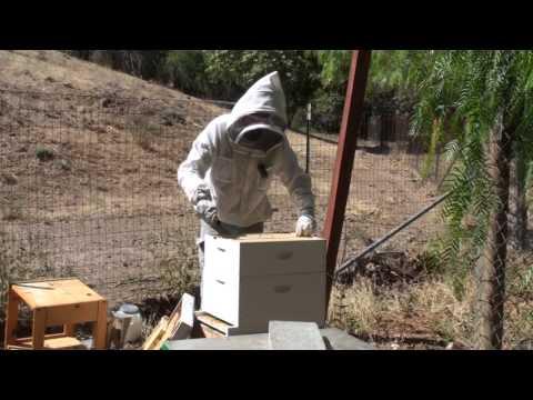 Bees: Powdered Sugar Mite Treatment 1 of 2