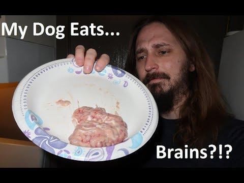 My dog, Jack, eats BRAINS?!?