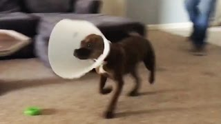 Best Animal Fails 2017 [Funny Pets]