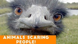 Funny Pets & Animals Scaring People Candid Reaction Comp April 2018 | Try Not to Laugh Animals