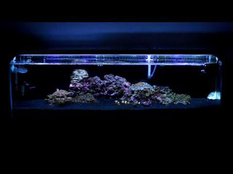 12 Gallon Mr. Aqua Reef Tank - Week 6