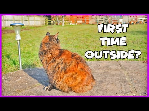 How To Let A Cat Out For The First Time! Advice For Letting Your Cat Outside For The First Time!