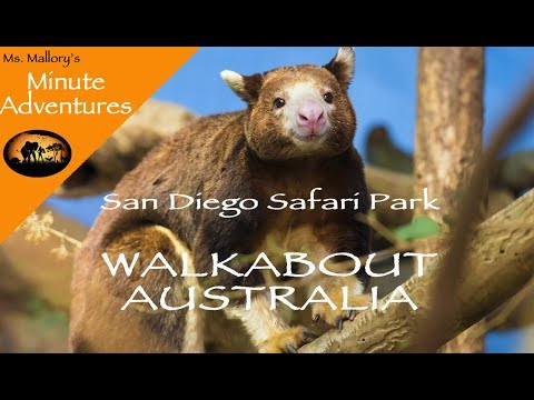 San Diego Safari Park's Walkabout Australia: Ms. Mallory Minute Adventures