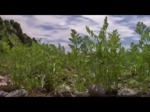 Certificate in Organic Horticulture Episode 1