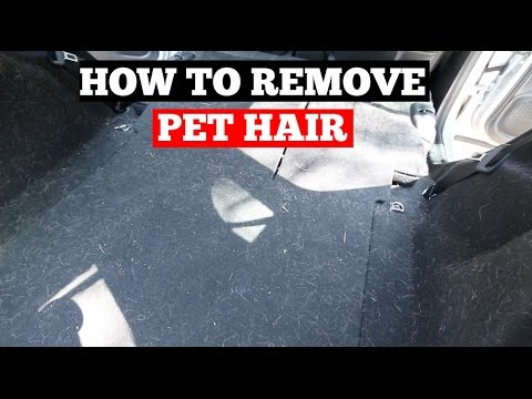 How To REMOVE Pet Hair From Car- Interior Car Detailing Tips