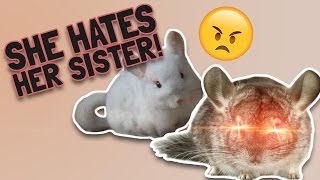 SHE HATES HER SISTER!