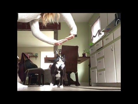 Cat Does Trick Like Dog || ViralHog