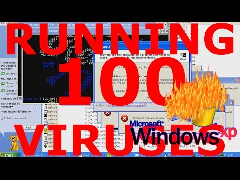 What happens if you run 100 viruses on Windows XP?