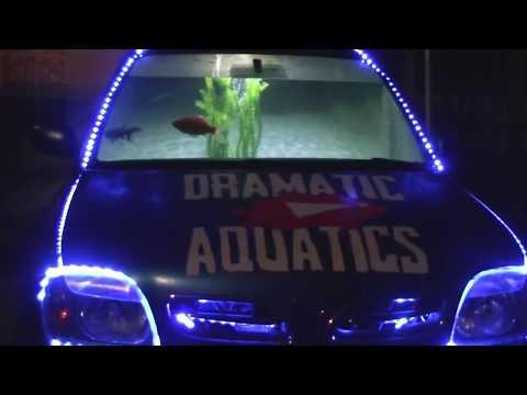 Best Aquarium I have ever built !! so far!! Car fish tank!!