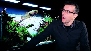 How To Prevent FISH From JUMPING OUT Of Planted Tanks