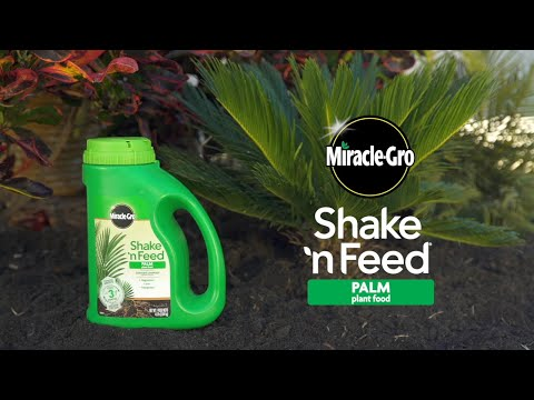 How to Use Miracle-Gro® Shake 'n Feed® Palm Plant Food