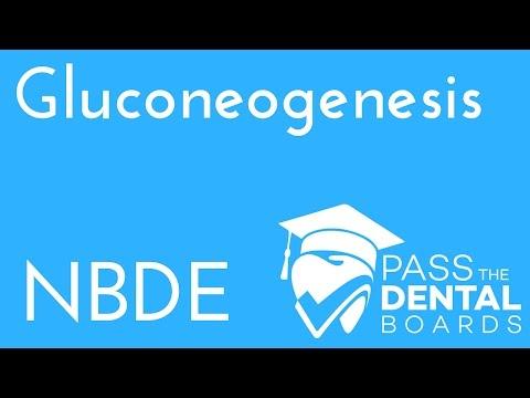 Gluconeogenesis - Biochemistry - NBDE