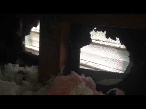 Attic Mold Growth In The Winter Time? Condensation and Mold In This Wilmette, IL Home