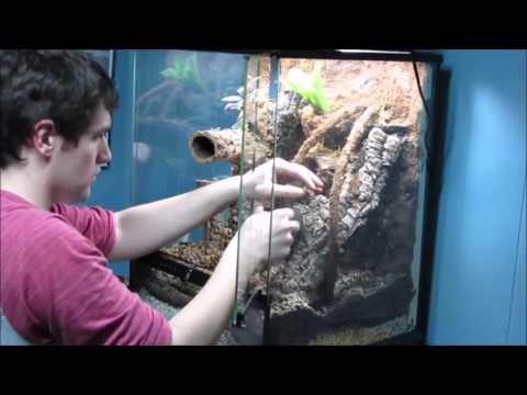 Crested Gecko Living Vivarium Build