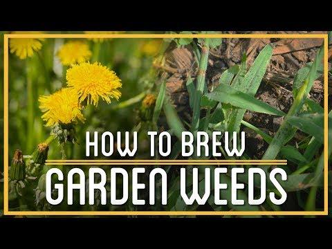 Crabgrass Beer & Dandelion Wine | How to Brew Everything | Weed Booze