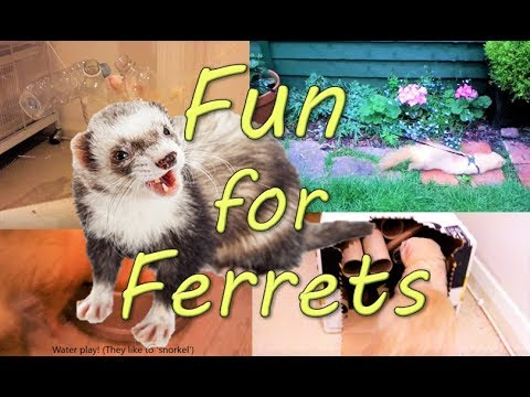Ferret ENRICHMENT - 12 Easy, cheap, fun ideas!