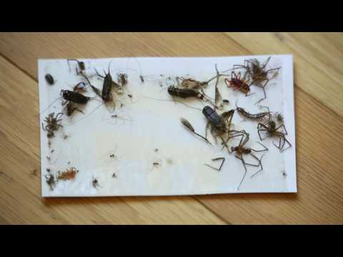 How to Safely Kill Spiders & Other Crawling Insects