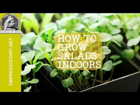 Growing Salads Indoors