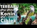 Terbaru Terapi Konin Full Tembakan Feat Ciblek + Suara Air Hd