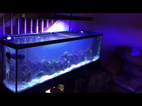 saltwater tank filter setup diy - rotter tube reef
