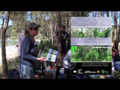 Asparagus plumosus weed control by Floating Landcare volunteers