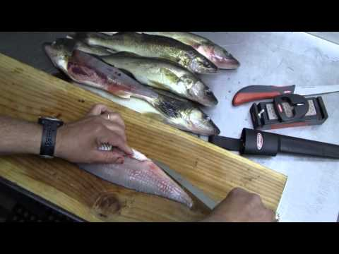 How to Fillet a Fish (Walleye)